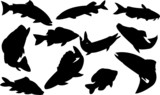 fishes collection - vector