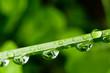 Wassertropfen auf Grashalm