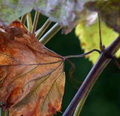 Weinbaltt - Abschied vom Sommer
