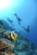 Two Red Sea bannerfish with scuba divers silhouettes.