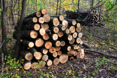 Ordered timber for firewood