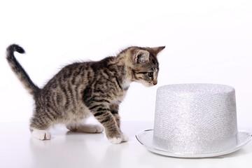 kleine Katze spielt mit silbernem Hut