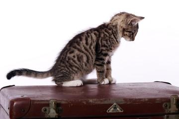 kleine Katze sitzt auf altem Koffer