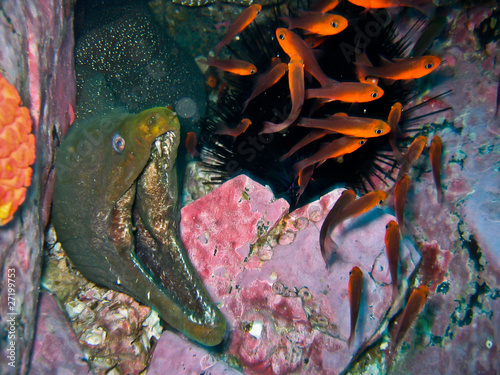 moray eel attack