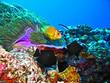 clown fish under the sea#4