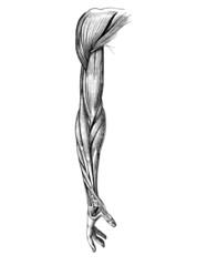 arm_1