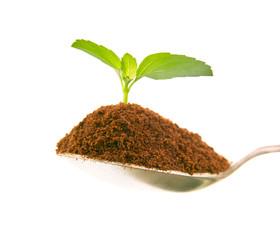 Zielona roślina wyrastająca z kopczyka ziemi
