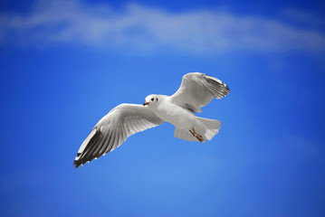A seagull soaring in the blue sky