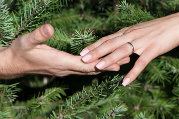 Close up of female and man's hands against fur-tree branches