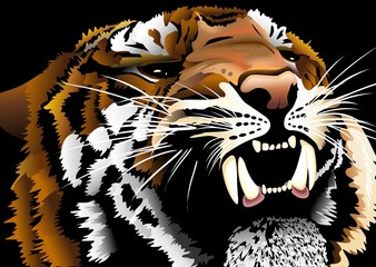 Tigre Testa-Tiger Head-Vector