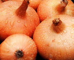 Detail of wet onions
