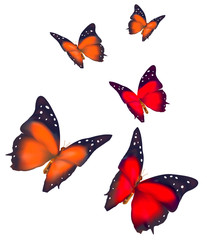 Beautiful Butterflies isolated on white background. Vector.