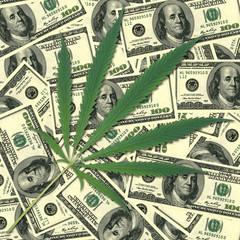 Sheet of a hemp. Background of money