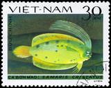 VIETNAM - CIRCA 1982 Crested Flounder poster