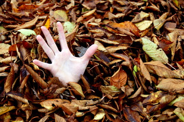 Desperate handfull of autumn leaves in a German garden