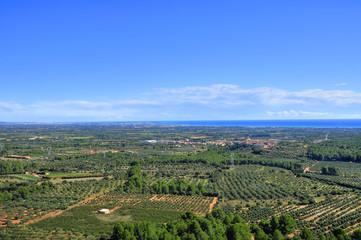 olive groves in Costa Daurada, Spain