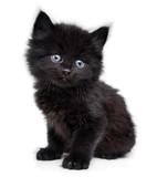 Black little kitten sitting down, white background