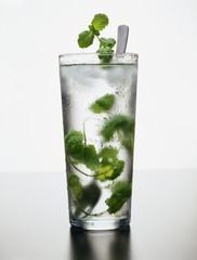 Menthe fraîche à l'eau