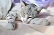 sweet dreams of cat