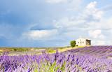 Fototapety chapel with lavender field, Plateau de Valensole, Provence, Fran