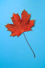 Leaf Lands