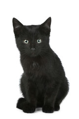 Black shorthair kitten
