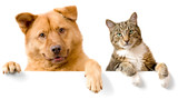 Fototapety Dog and Cat above white banner
