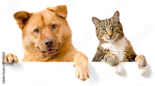Dog and Cat above white banner - 27288920