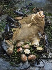 Turbot, homards et ormeaux