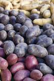 Fototapety Assortiments de pommes de terre