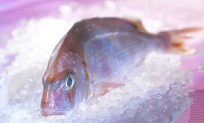 pink sea bream