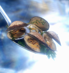 Steaming carpet-shell clams