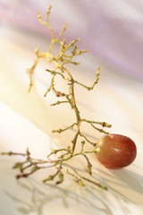 last grape on empty stalk