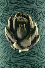 dried artichoke
