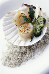 Scallops à la coque