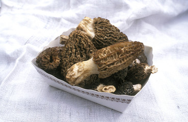 Small carton of fresh morels