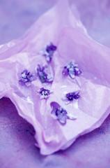sugar violets