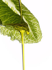 olive oil dropping on a lettuce leaf
