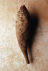 Long beetroot