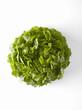 Krisette lettuce