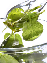 Spinach shoot salad
