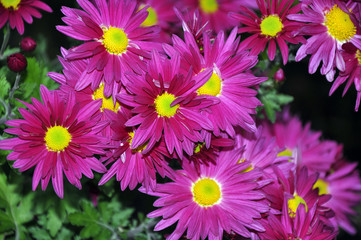Flores lilas 3