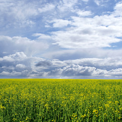 Beautiful image if a green field on a blue sky background