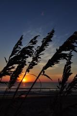 Outer Banks Sea Oats Sunrise