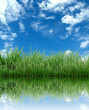 green grass with blue sky reflection