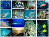 Fototapety faune et flore mer rouge Egypte