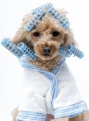 Curler Dog