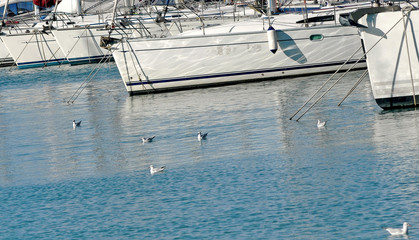 gulls and yacht
