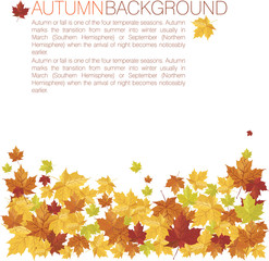 autumn backbround