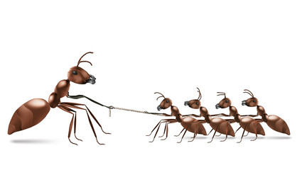 ant rope pulling
